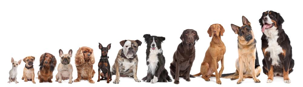 cool-dogs.jpg