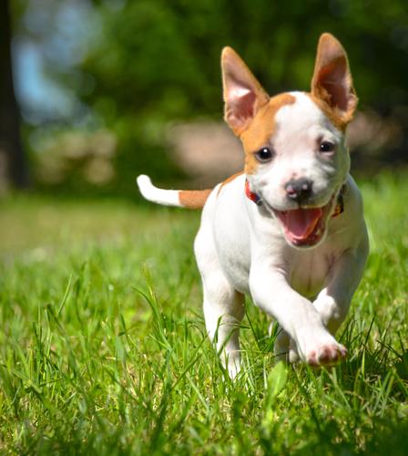 small-dog-treats.jpg